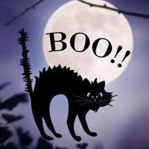 Häxan katt boo Halloween väggdekor klistermärken